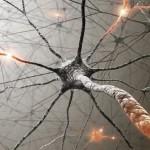 脳を訓練して癖を治そう。新しい神経経路を創る十の方法